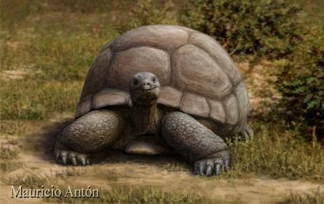 Recreación de la tortuga terrestre de Mauricio Antón