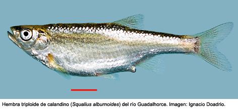 """""""Soy la persona que más ha estudiado los peces continentales mediterráneos"""""""