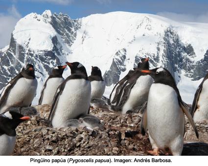 """""""En la Antártida hay cinco especies de pingüinos"""""""