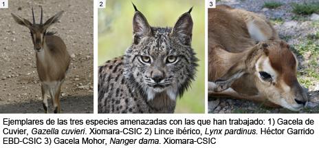 Especies estudiadas