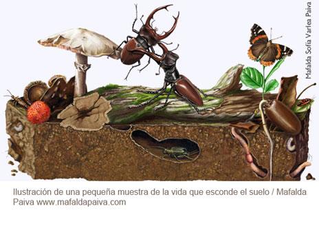 ilustración Mafalda Paiva