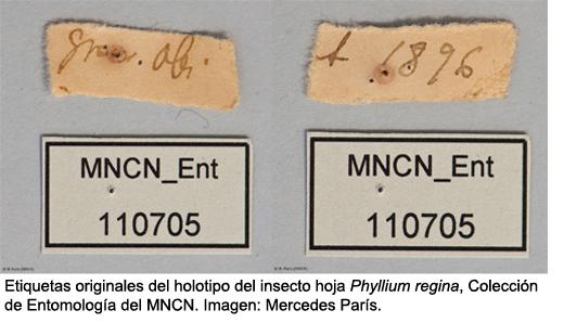 etiquetas insecto hoja