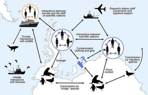 Gráfico contagio Covid-19 Antártida